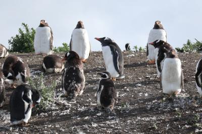 2018 パタゴニア (3)~ウシュアイア編 ビーグル水道とフエゴ国立公園とペンギン島