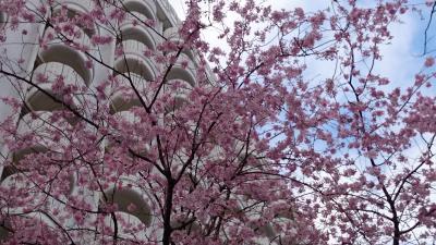 桜まつりのグランドプリンスホテル新高輪 & アクアパークもSAKURA AQUARIUM