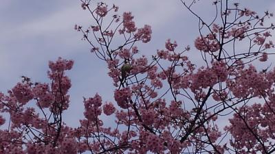 シニアトラベラー スイス料理とお花見満喫の旅!