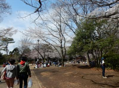お花見は3月31日綱島公園桜祭り 買い物はアピタテラス横浜綱島3月30日開店