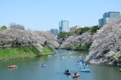 千鳥ヶ淵で満開の桜をめでる。