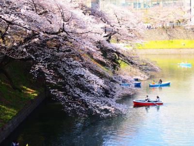 目黒川、千鳥ヶ淵、砧公園、夜桜ならぬ朝桜を見に行く。2018編