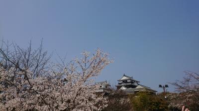 松山城でら桜が満開なんだぞー最高