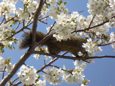春の伊豆旅行♪ Vol.14 城ヶ崎海岸:「ニューヨークランプミュージアム&フラワーガーデン」春の花・桜・リスを眺めて♪