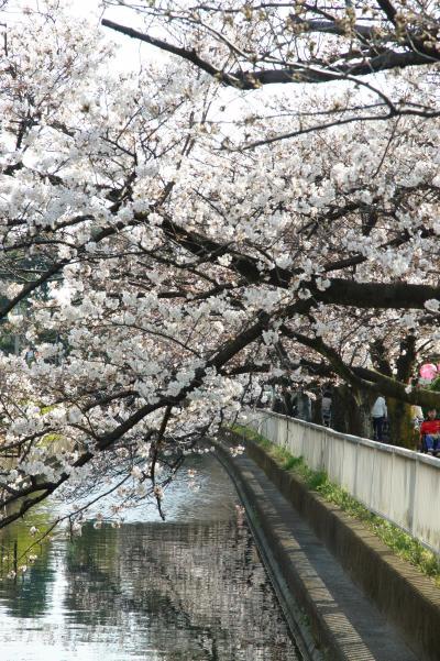 20180325-2 大島 仙台堀川公園、桜まつり