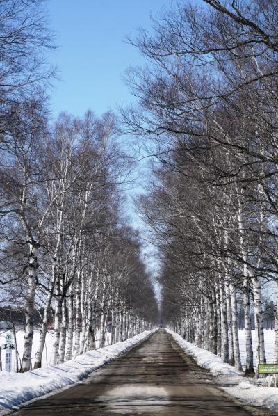 433-タウシュベツ橋梁スノーシューツアー&ユニークな宿「中村屋」【前編】…その前に「マッサン」の白樺並木へ