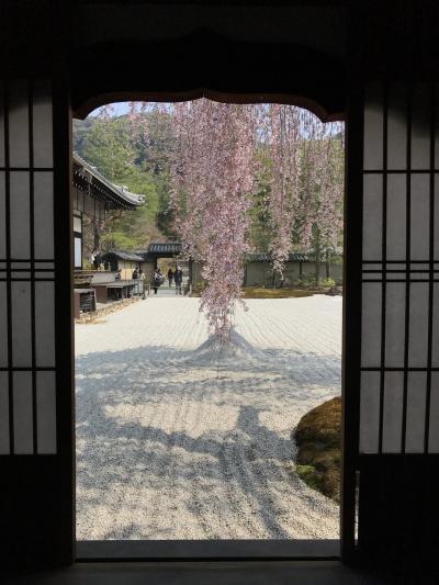 滞在時間4時間半(^^;) 駆け足で巡る京都の食と桜2018(メインは高台寺の桜)