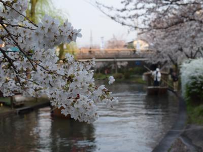 清酒 レトロ桜