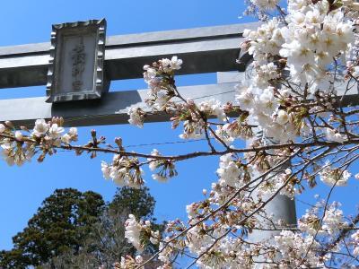 桜が咲き始めた香取神宮 & 鹿島神宮