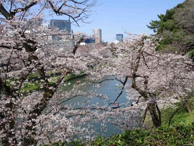 北の丸公園 桜 寸景