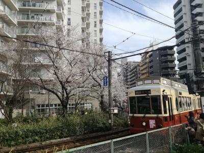 神田川の桜と板橋の桜