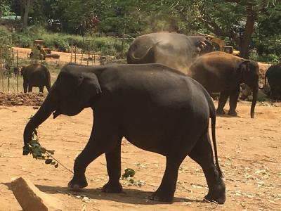 おばさん女子旅 IN スリランカ 2