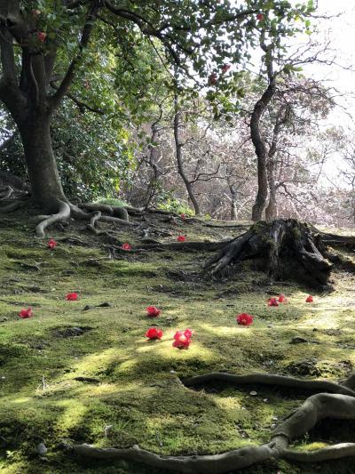 2018早春の京都・伏見  椿と京フレンチを堪能する大人の旅