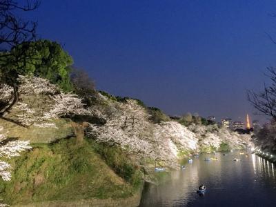 山王日枝神社から靖国神社そして千鳥ヶ淵で夜桜見物
