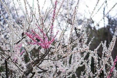 名古屋東山植物園&星ヶ丘