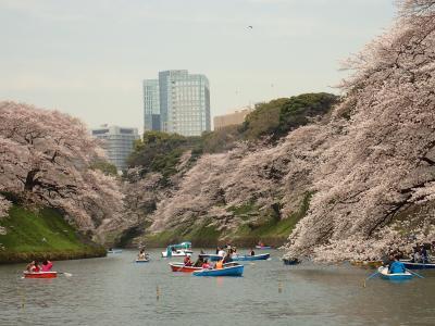 皇居周辺の桜 訪問記