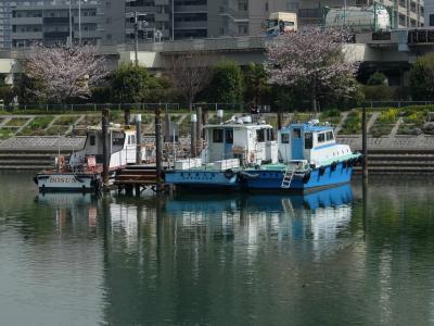 しながわ花海道 桜咲いて 菜の花咲いて