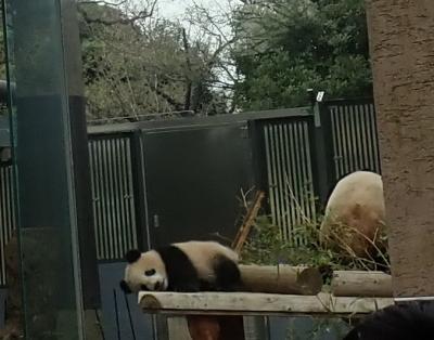 上野動物園2018春〈シャンシャンに会いに〉