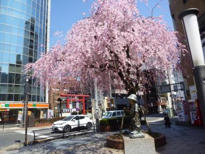 八王子の桜+α 2018/03/25-26