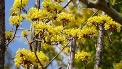 早朝散歩 宝塚市安倉上の池の日の出と、伊丹市荒牧に咲く花 下巻。