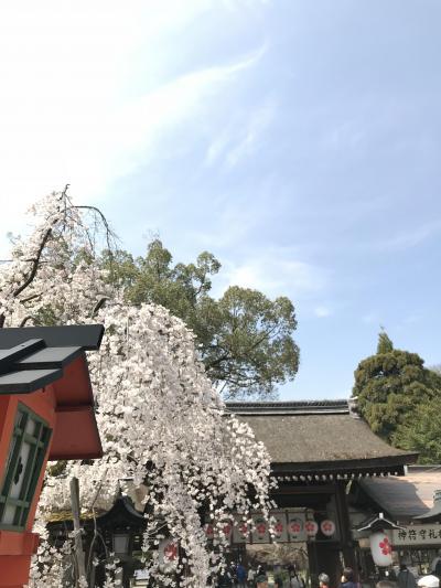 2018年3月 京都に桜シーズンがやって来た!平野神社~淀川河川公園背割堤地区の桜 前編