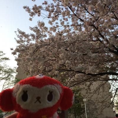 ぶらり京都散策☆桜編