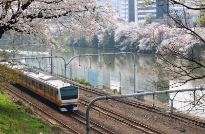 東京桜散歩 (千鳥ヶ淵~靖国神社~外濠公園) ・・・
