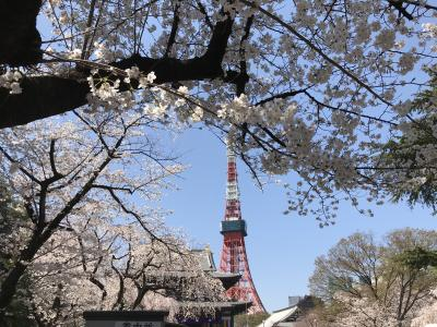 桜と東京タワーと増上寺