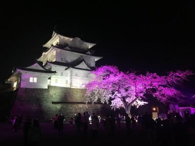 桜が満開!春を満喫!小田原城址公園でお花見と城下町ぶらぶら散歩