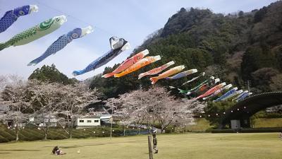 早い春の訪れを楽しむー磐田にて花桃と桜と