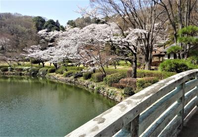 薬師池公園の桜と相模原市立博物館・JAXA相模原キャンパス見学