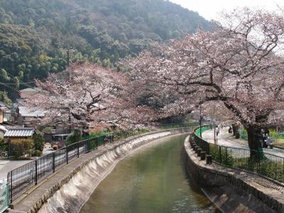 日帰り京都桜めぐり その1