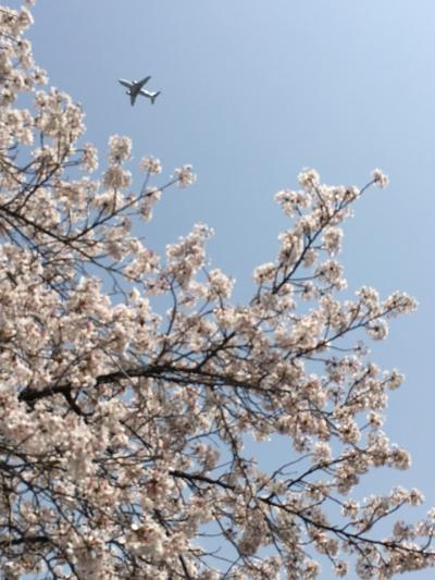 2018年4月 春爛漫♪ワインと桜を満喫した大阪ワンデイトリップ♪
