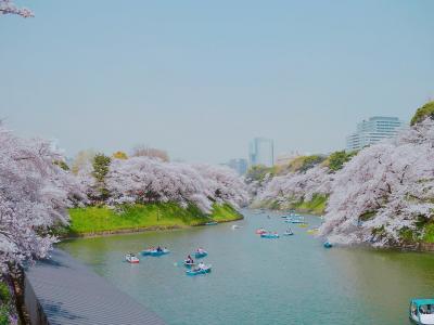 【桜2018】満開の桜を見に行く!@皇居乾通り一般公開*千鳥ヶ淵