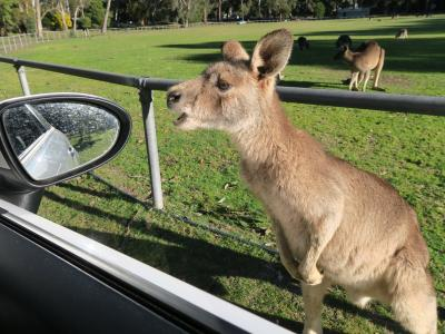 2017夏休み オーストラリア旅行② ヤミツキのグランピアンズ国立公園