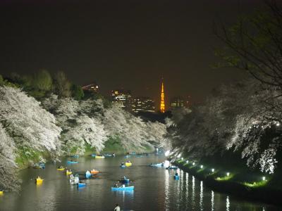 美しい千鳥ヶ淵の桜のライトアップ 2018