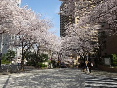 六本木一丁目付近の桜 2018