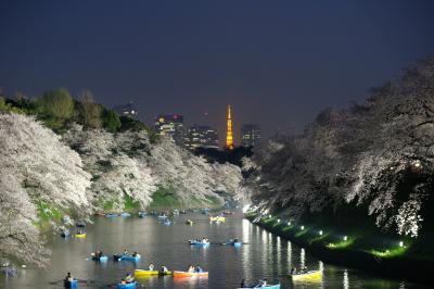 千鳥ヶ淵の幻想的な夜桜