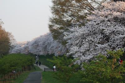 栃木・茨城・埼玉 春の花絵巻&スカイベリー by 日帰りバス