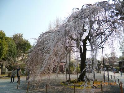 京都の春 ('18年3月)
