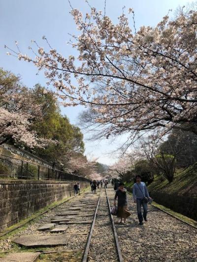 桜並木を堪能