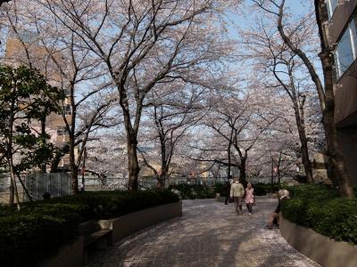 神田川の桜を 寄り道しながらの散歩 上 目白不動