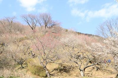 筑波山の梅まつりとつくばわんわんランドを訪れる