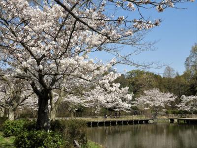 春爛漫!の奥須磨公園