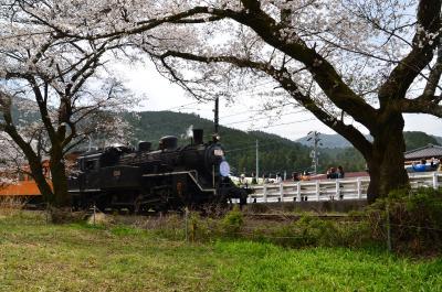 桜とSL 2018.03.26 =3.家山・桜トンネル付近を散策・前編=