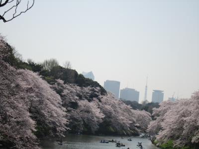 おのぼりさんが行く♪初めての満開の桜♪