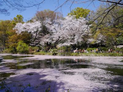 井の頭公園 ~ 2018 桜 ~
