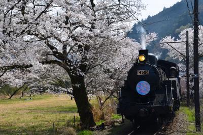 桜とSL 2018.03.26 =3.家山・桜トンネル付近を散策・後編=