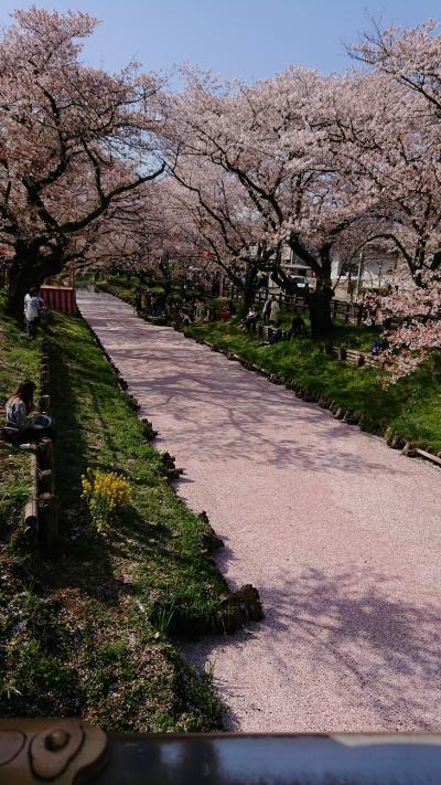 川越の桜(+目黒川と大宮公園の桜を少し)