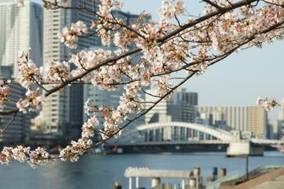 20180331-2 隅田川テラス、勝鬨橋から聖路加まで